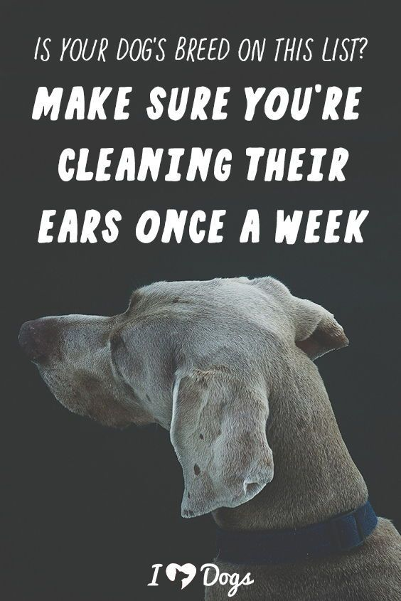 Is Your Dog S Breed On This List Make Sure You Re Cleaning Their