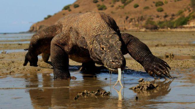 Komodo, la isla donde hay dragones de verdad