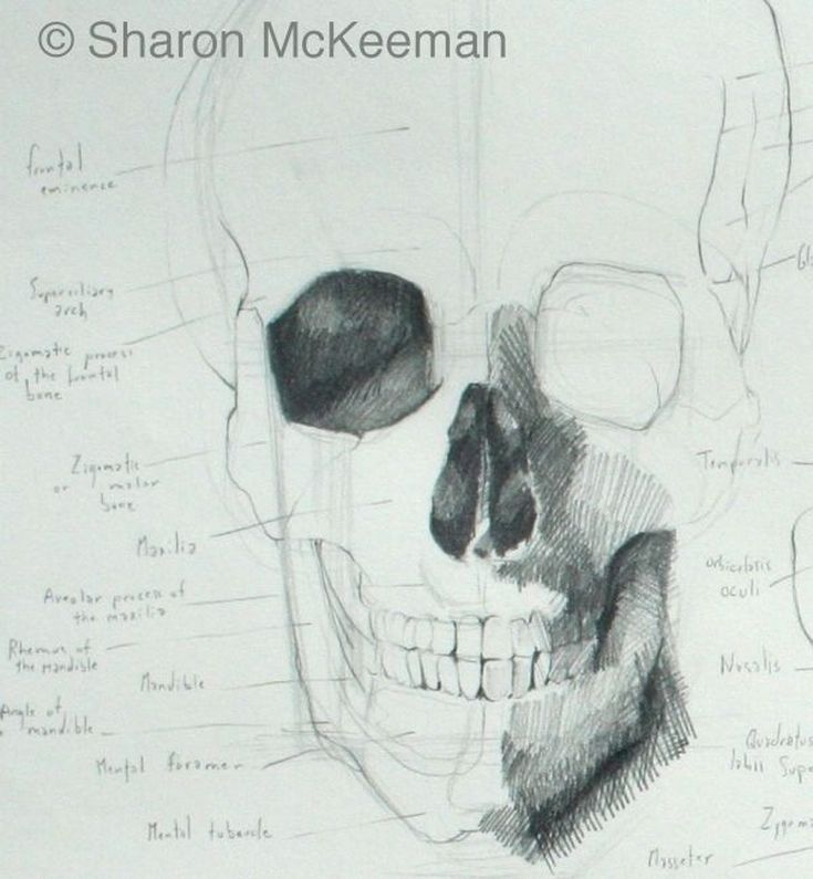 Draw a Better Head and Neck by Learning Their Anatomy | Anatomy and ...