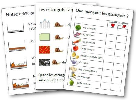 affichages pour illustrer une s quence sur les escargots en maternelle les escargots escargot. Black Bedroom Furniture Sets. Home Design Ideas