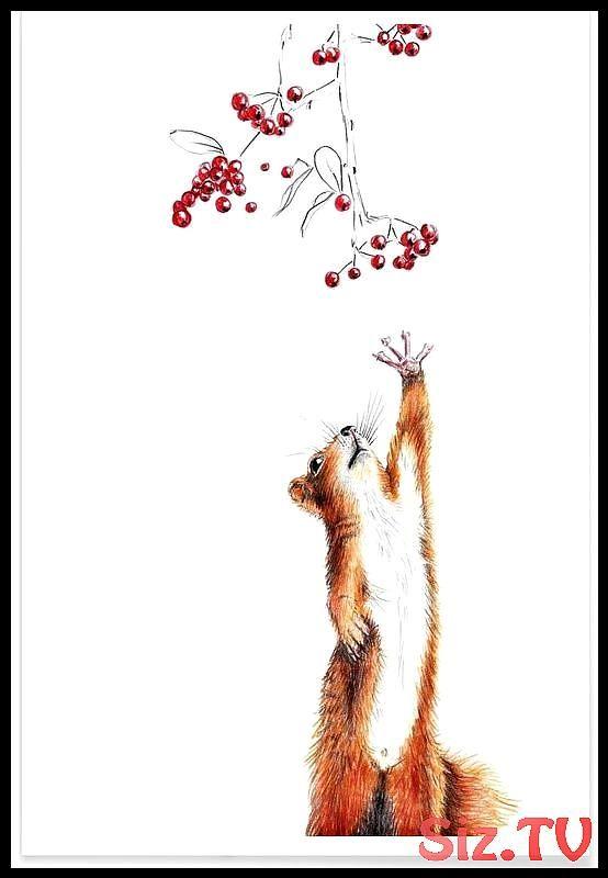 Squirrel als Premium Poster von Janine Sommer | JUNIQE,  #als #Janine #JUNIQE #Poster #Premiu…