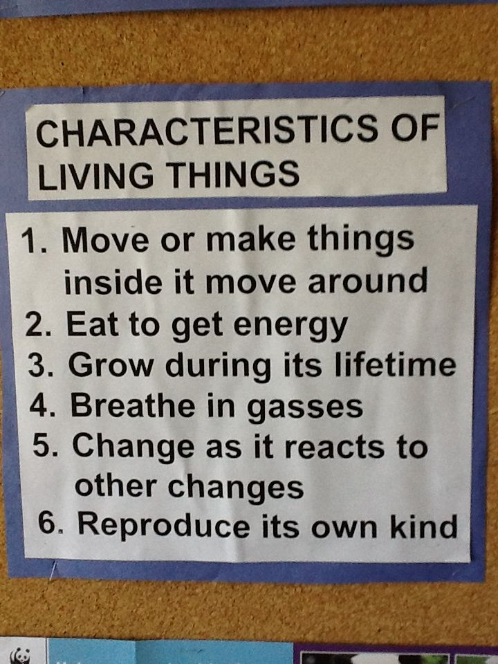 Six characteristics of living things...do you know them?