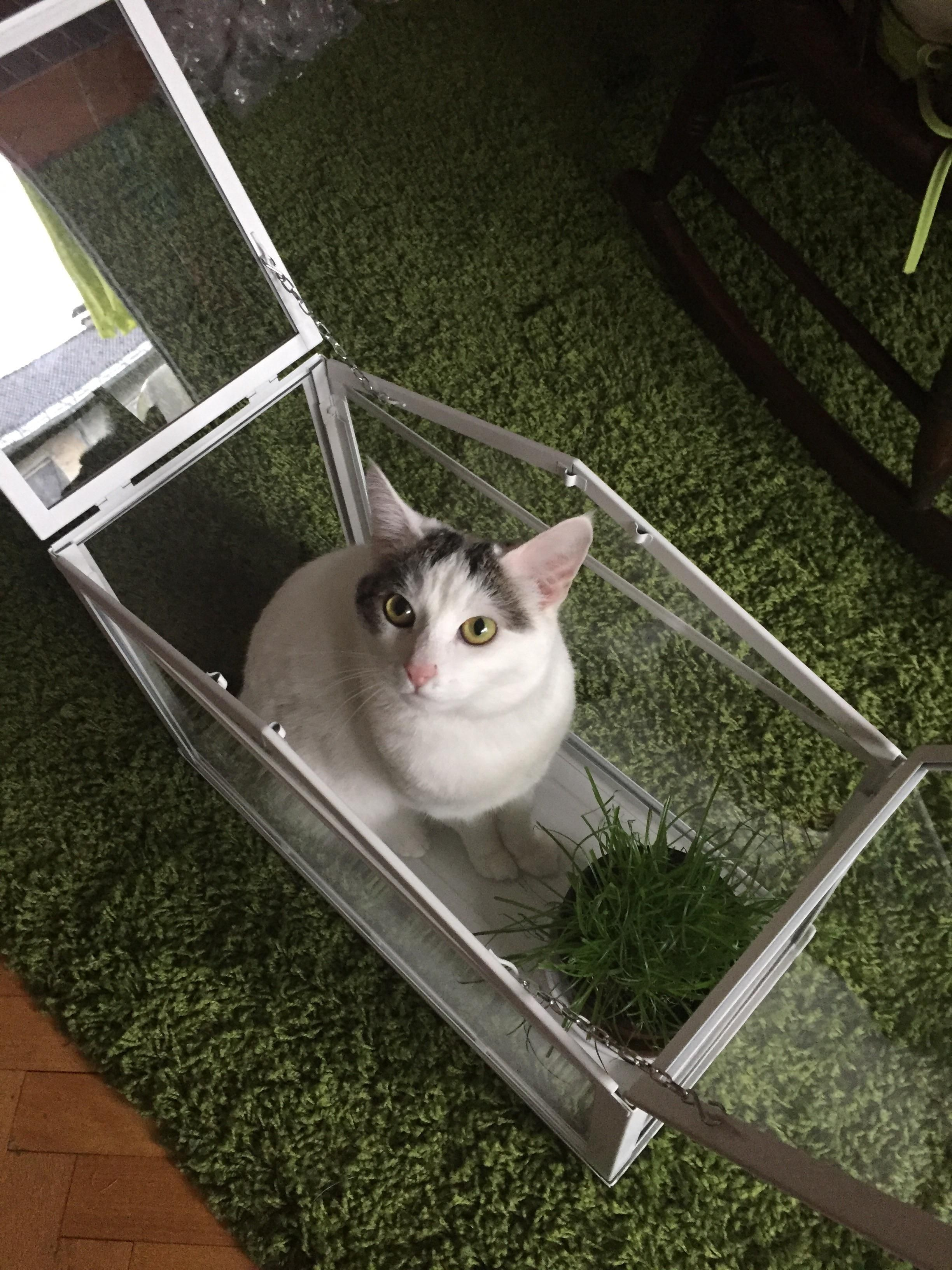Highefficiency cat trap cat cats thecattrapisworking