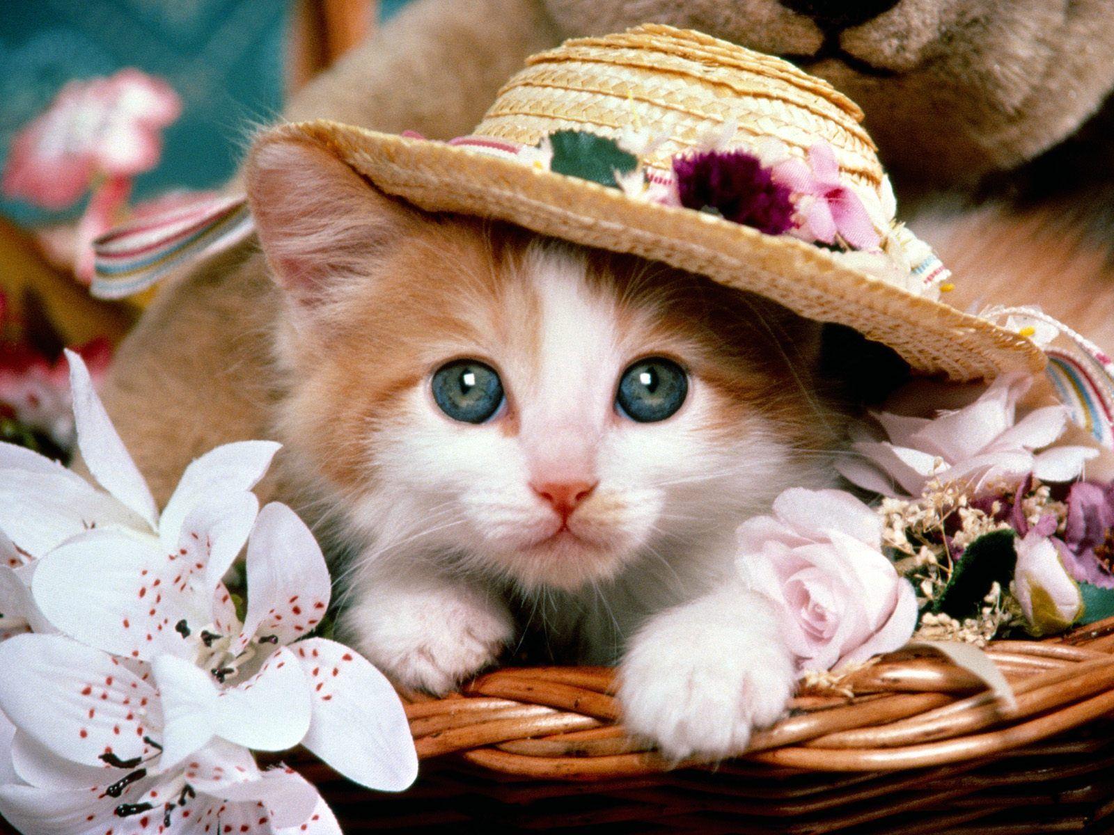 Competition For A Mischievous Face Under A Hat Gatos Tiernos Fotos Con Gatos Fotos De Gatitos Tiernos