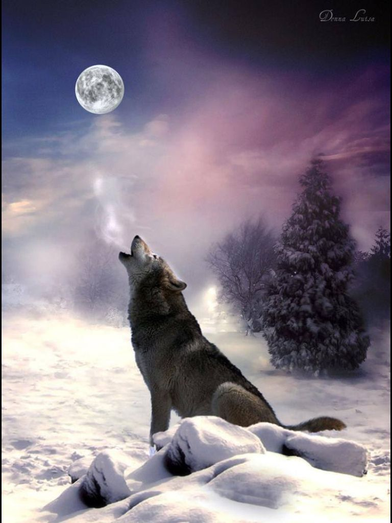 George Stephen Bday Howl At The Moon Shoot Out The Lights It S A Small Town Saturday Night Wild Wolf Animals Wolf Spirit