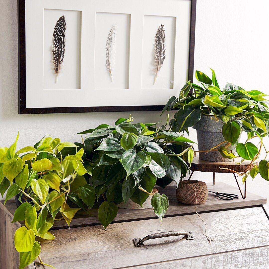 23 of our favorite lowlight houseplants  indoor plants