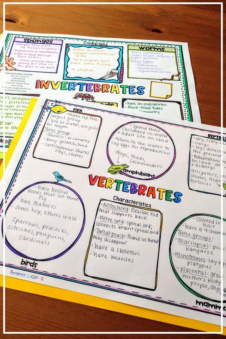 hight resolution of Vertebrates and Invertebrates Worksheets   Vertebrates and invertebrates