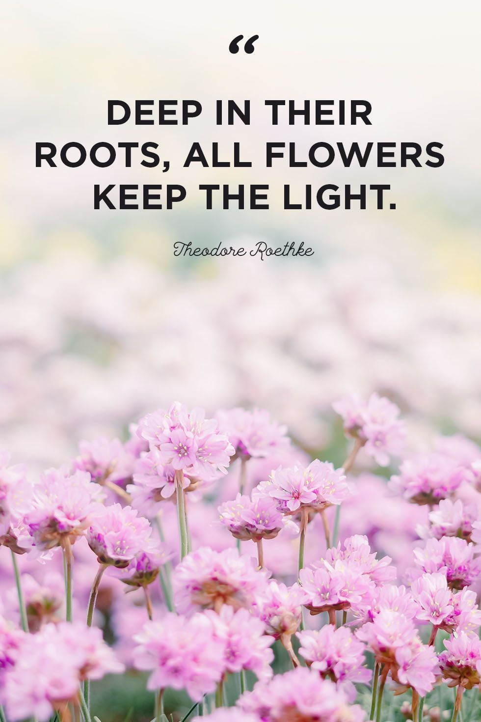 Flower Quotes to Inspire Growth Flower quotes