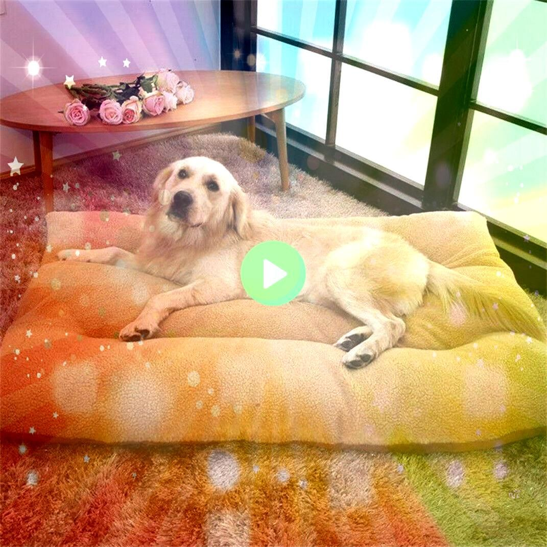 Pet Dog Bed Extra Comfy Washable Pet Kennel House Plush Pillow Sofa Large 1992XL Pet Dog Bed Extra Comfy Washable Pet Kennel House Plush Pillow Sofa Large 1992 If you onl...