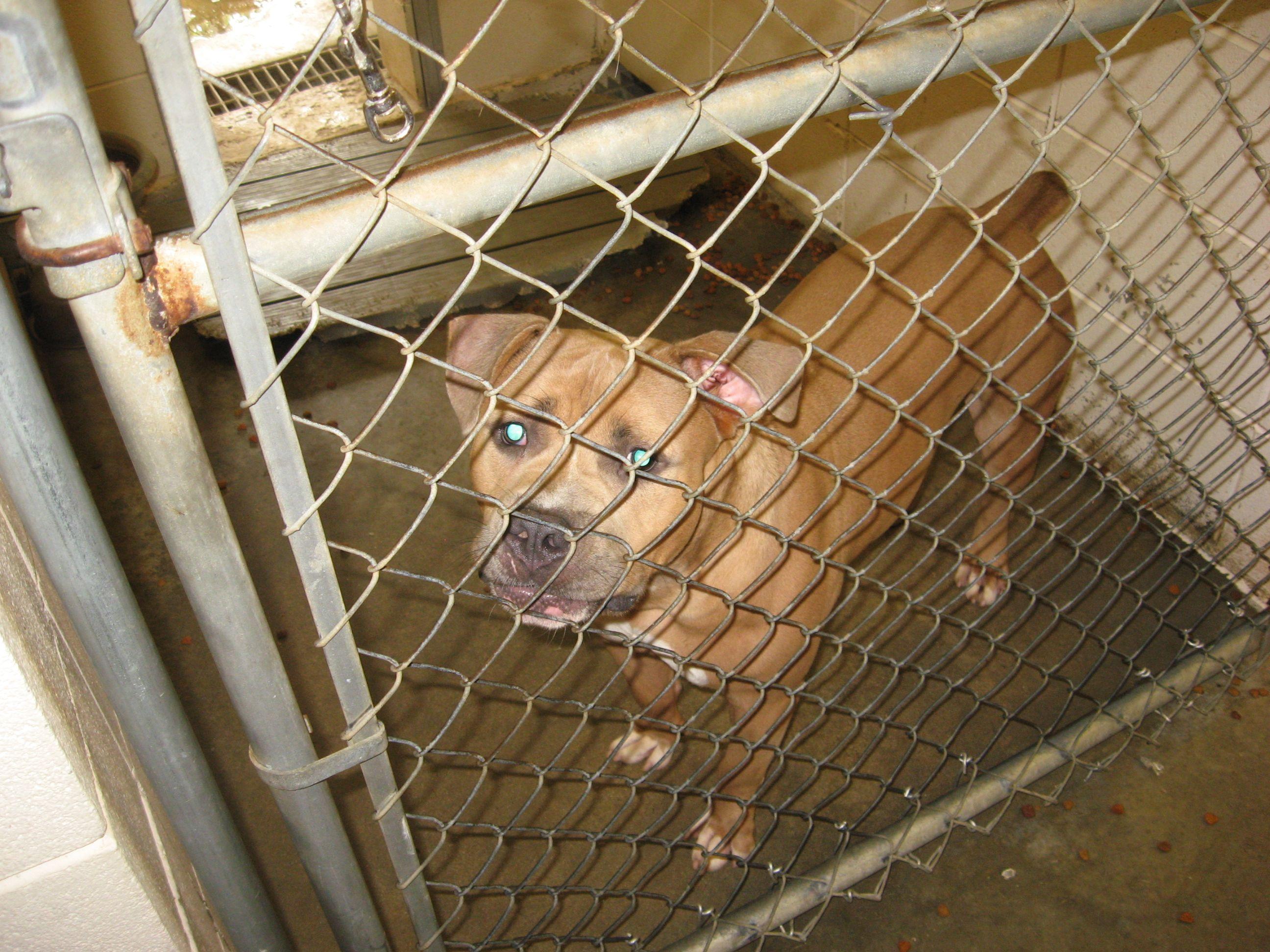 Animal Shelters Pet Euthanasia Animal shelter, Pets