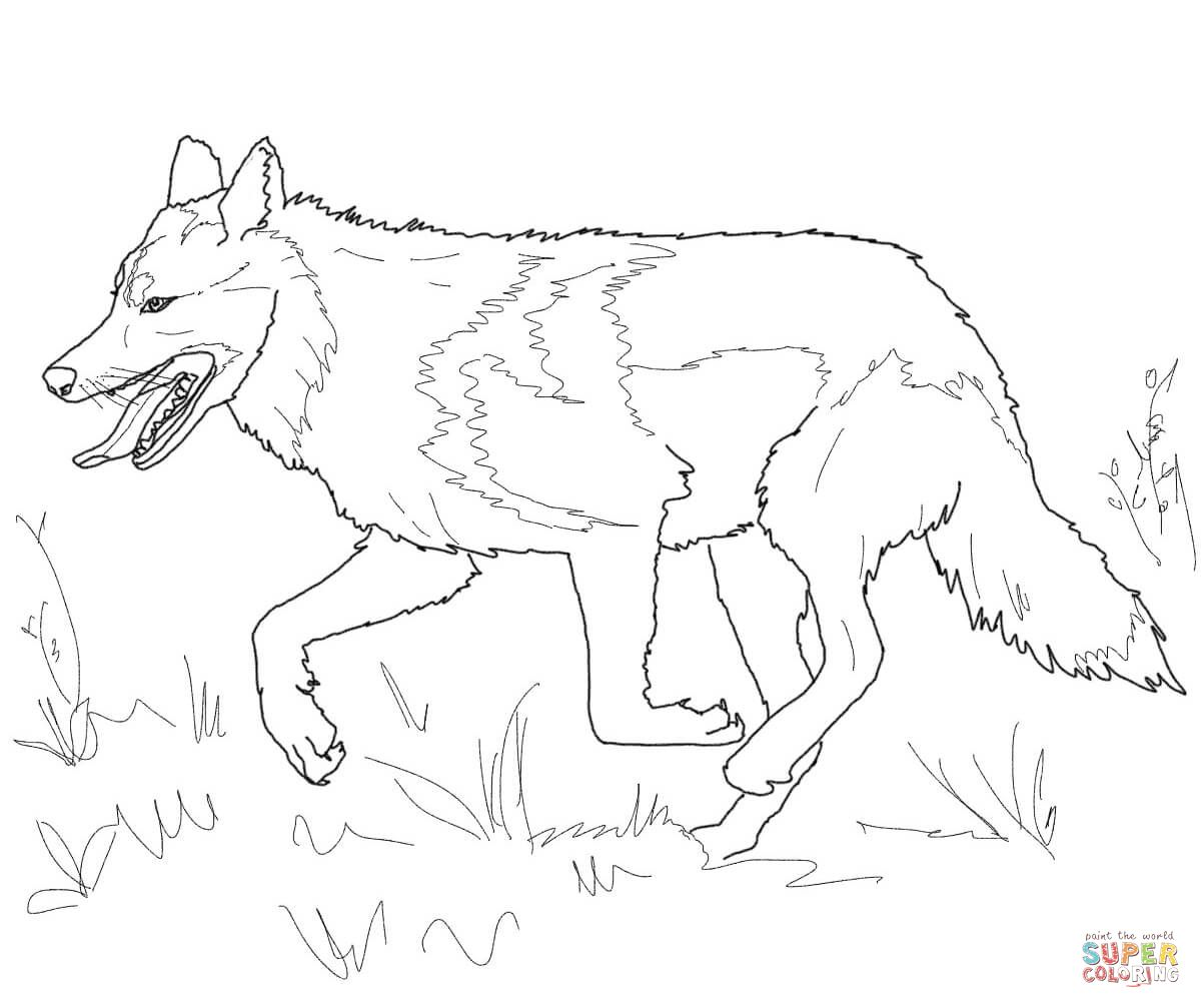 Running Mexican Grey Wolf | Super Coloring | dog patterns | Pinterest