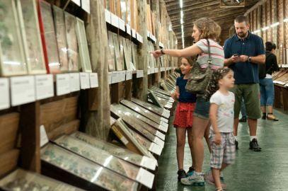 Descubra una de las mayores colecciones de insectos en exhibición : INSECTARIUM, Museo del Mar, La barra de Maldonado, Punta del Este.