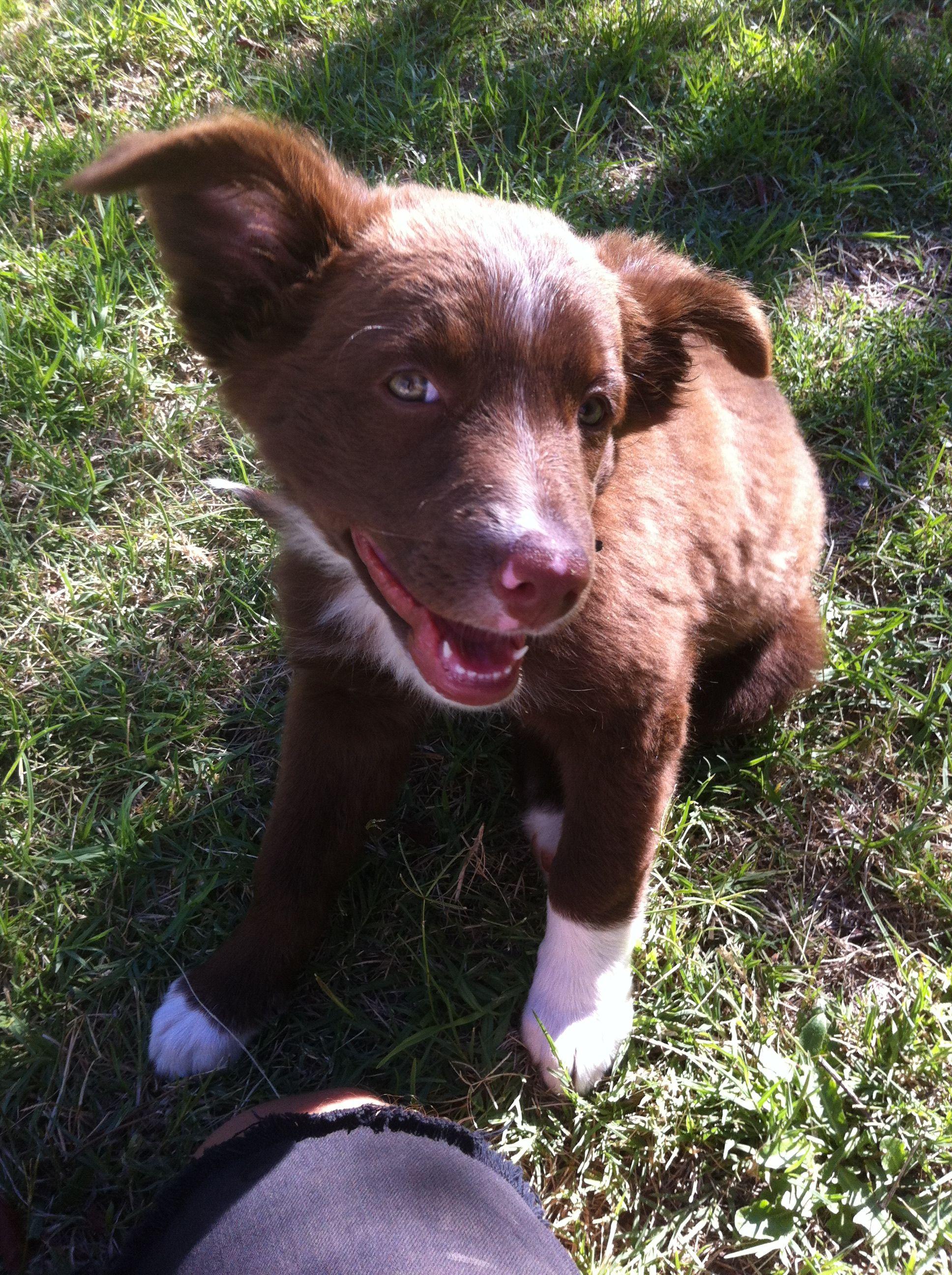 My new best mate. Charli dawg!!