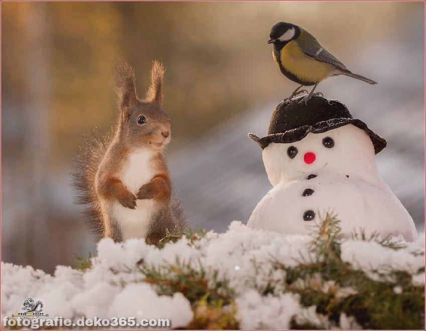 Eichhörnchen mit Weihnachten