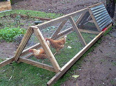 basic a frame chicken tractor narrow design might be ideal for urban applications