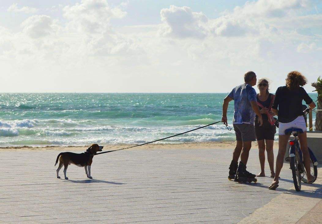 Where To Swim Play And Stay In Florida With Your Dog Pompano Beach To Miami Beach Dog Friendly Vacation Pompano Beach Play And Stay