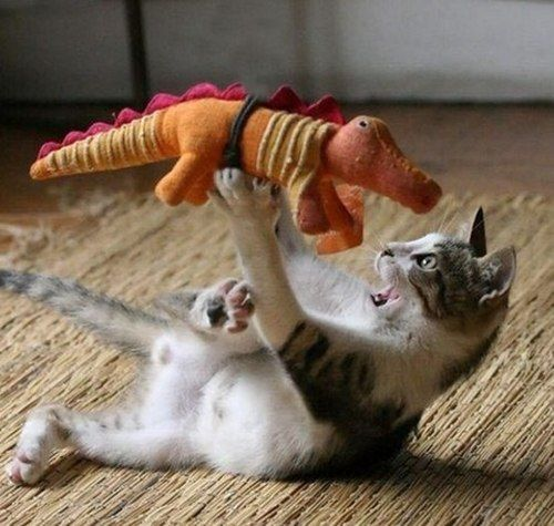 PetsLady's Pick: Funny Cat Fight Of The Day ... see more at PetsLady.com ... The FUN site for Animal Lovers