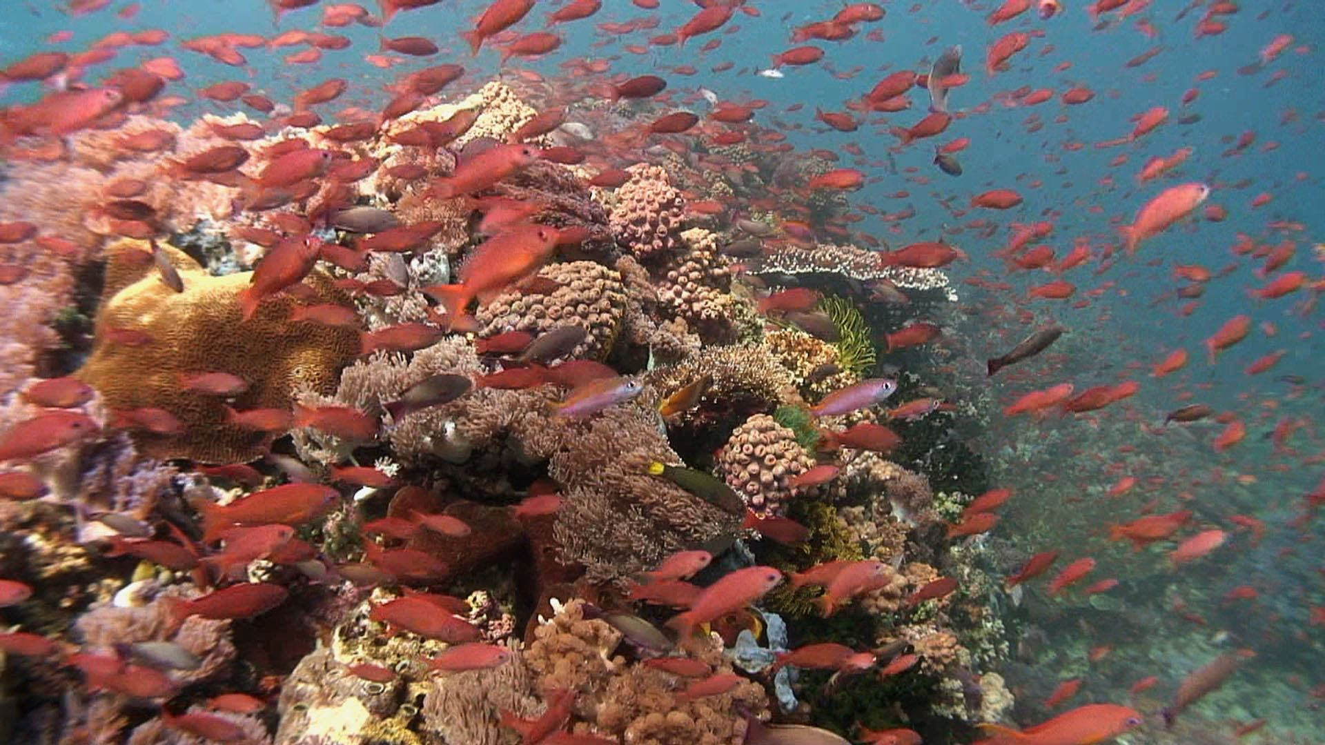 Jonathan Bird S Blue World Coral Reefs With Images
