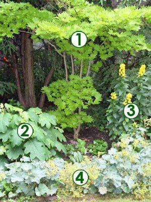 Une Scene Lumineuse A L Ombre Scenes De Jardins Jardins