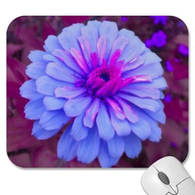 "Periwinkle n Pink Zinnia Mousepad  Pretty in Periwinkle. This ""new"" zinnia color is what fantasies are made of."