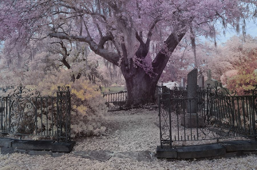 Magnolia Cemetery by Tony Sweet on 500px