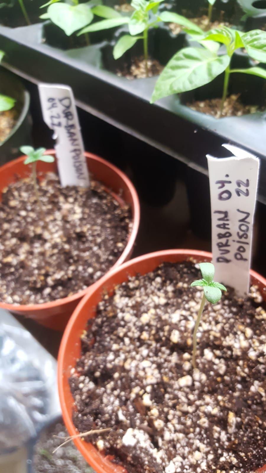 Pin on Grow Cannabis