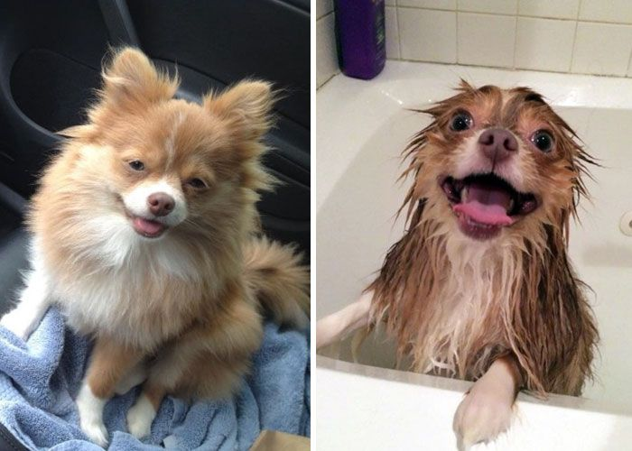 89 Funny Dog Pics Before And After A Bath Cute Dog Pictures
