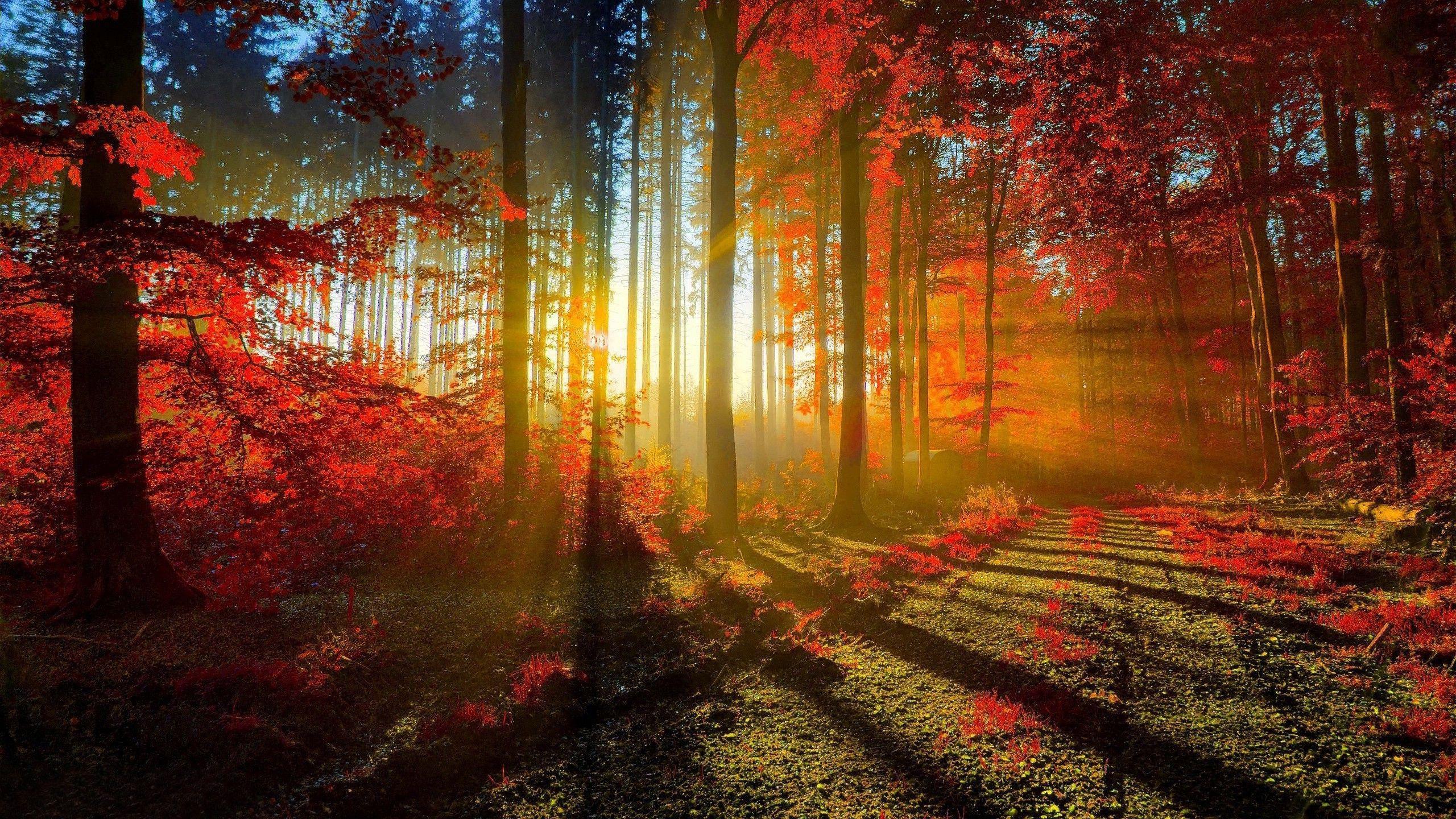 Sunlit Road Through The Autumn Woods Wallpaper 1025002 Hd Wallpapers Wallpaper Desktop Kertas Dinding Pemandangan