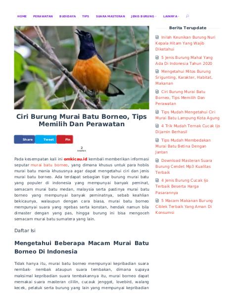 Ciri Burung Murai Batu Borneo Tips Memilih Dan Perawatan Di 2020 Burung Perawatan Tips