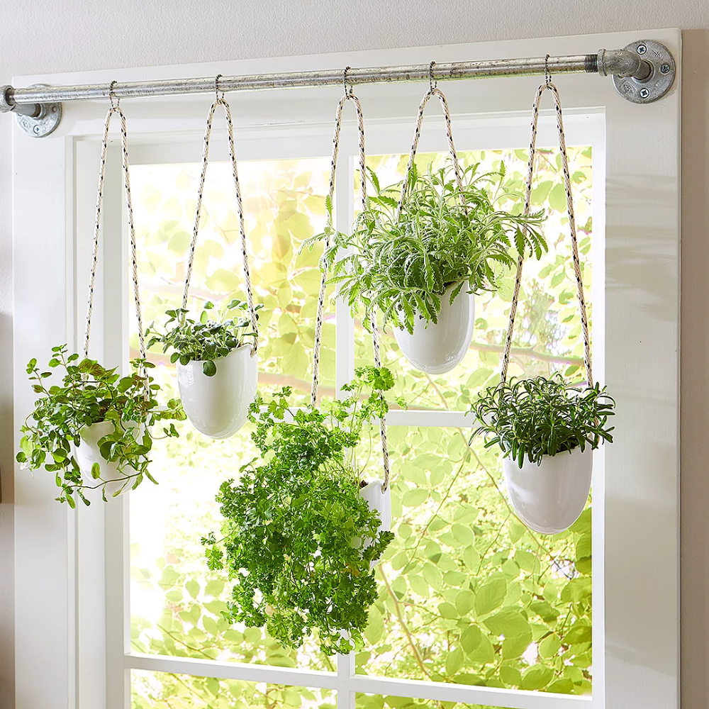 These 13 Herbs Will Thrive In Container Gardens In 2020