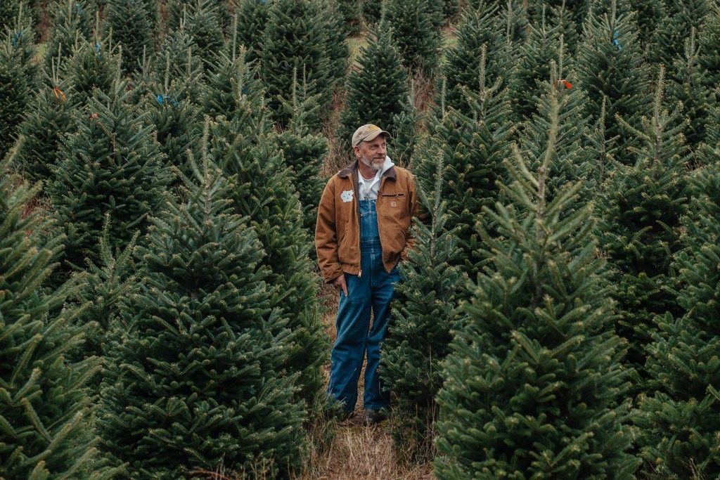 Real Vs Artificial Christmas Trees Which Is The Greener Choice Fake Christmas Trees Green Choices Artificial Christmas Tree