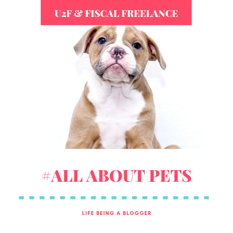 Pet Insurance Don T Forget To Cover Your Best Friend For Life Pet Life I Love Dogs Pets