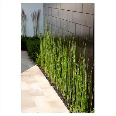 bamboo strip