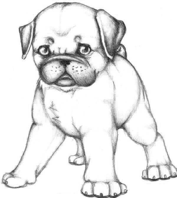 Skecth Of Pug Dog Coloring Page Puppy Coloring Pages Dog Coloring Page Coloring Books