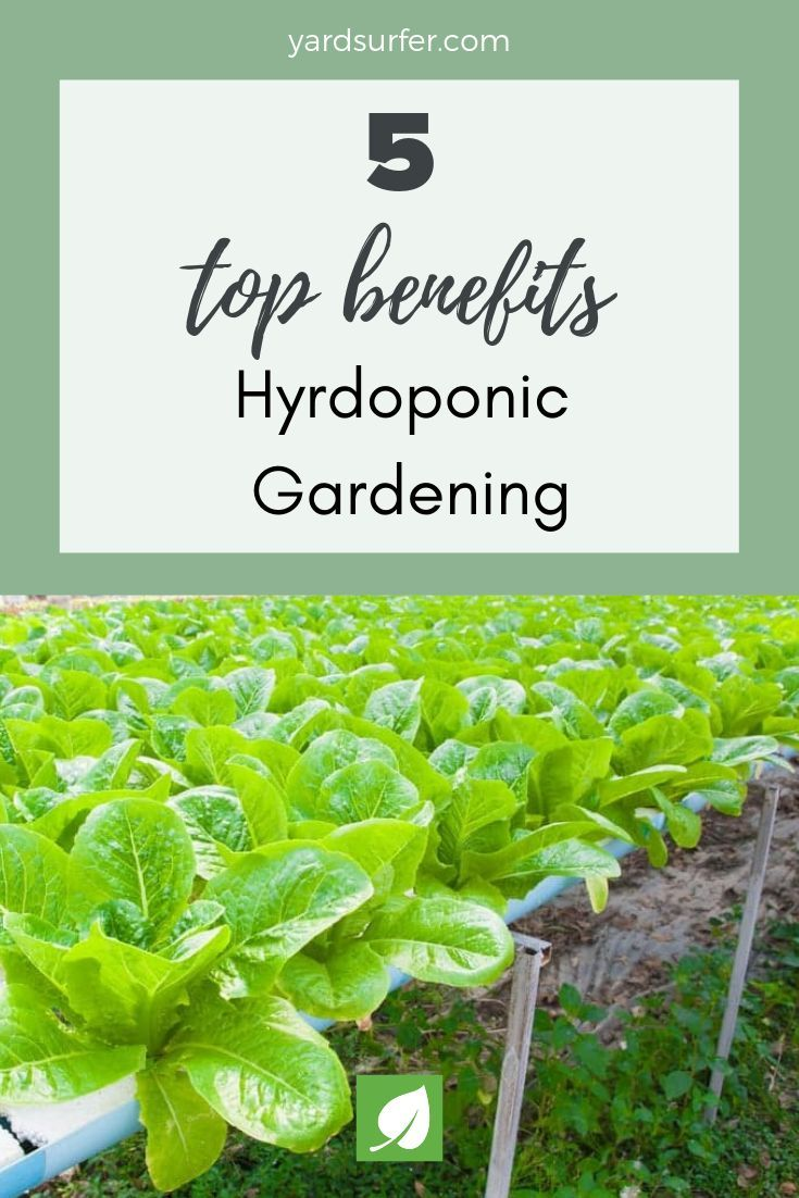 This List Of The Pros And Cons Of Hydroponic Gardening Will Serve To Help You Assess Whether This Gardeni Gardening Techniques Hydroponics Hydroponic Gardening