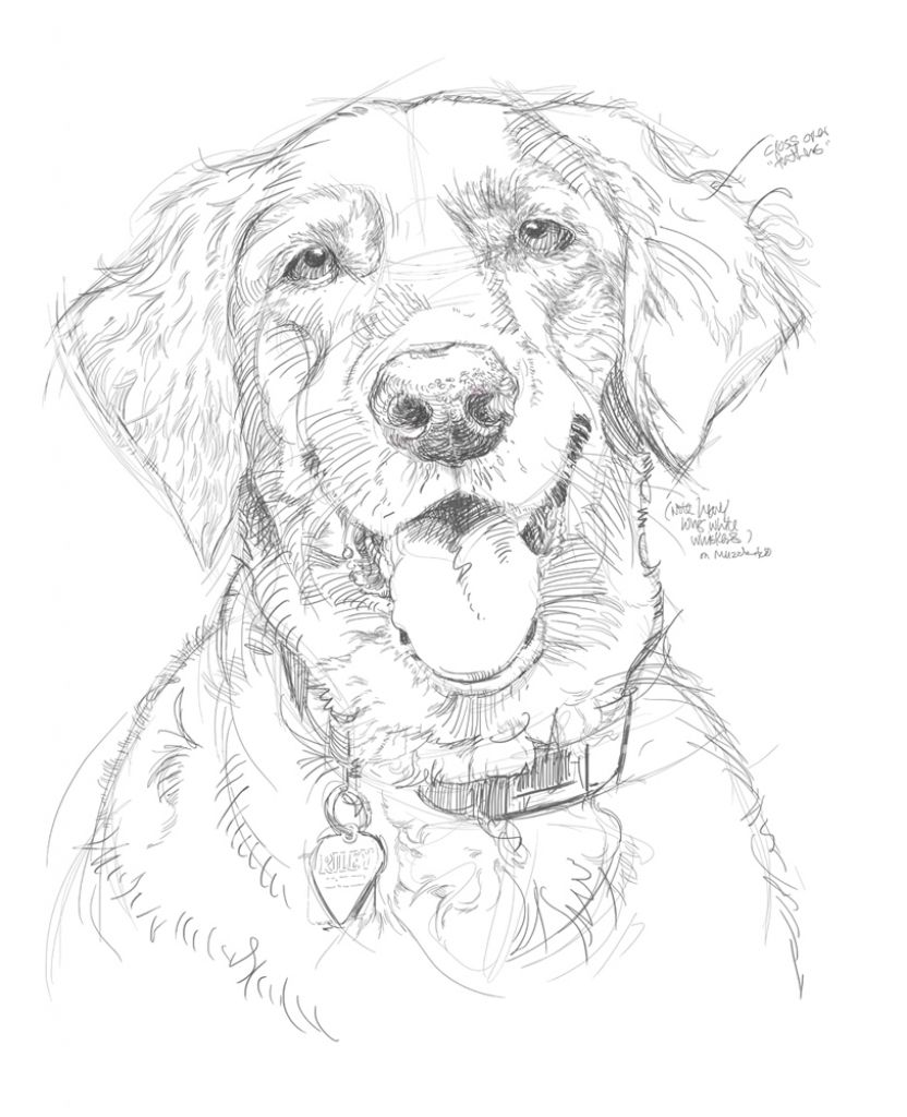 Pencil sketches of dogs www pixshark com images drawing in