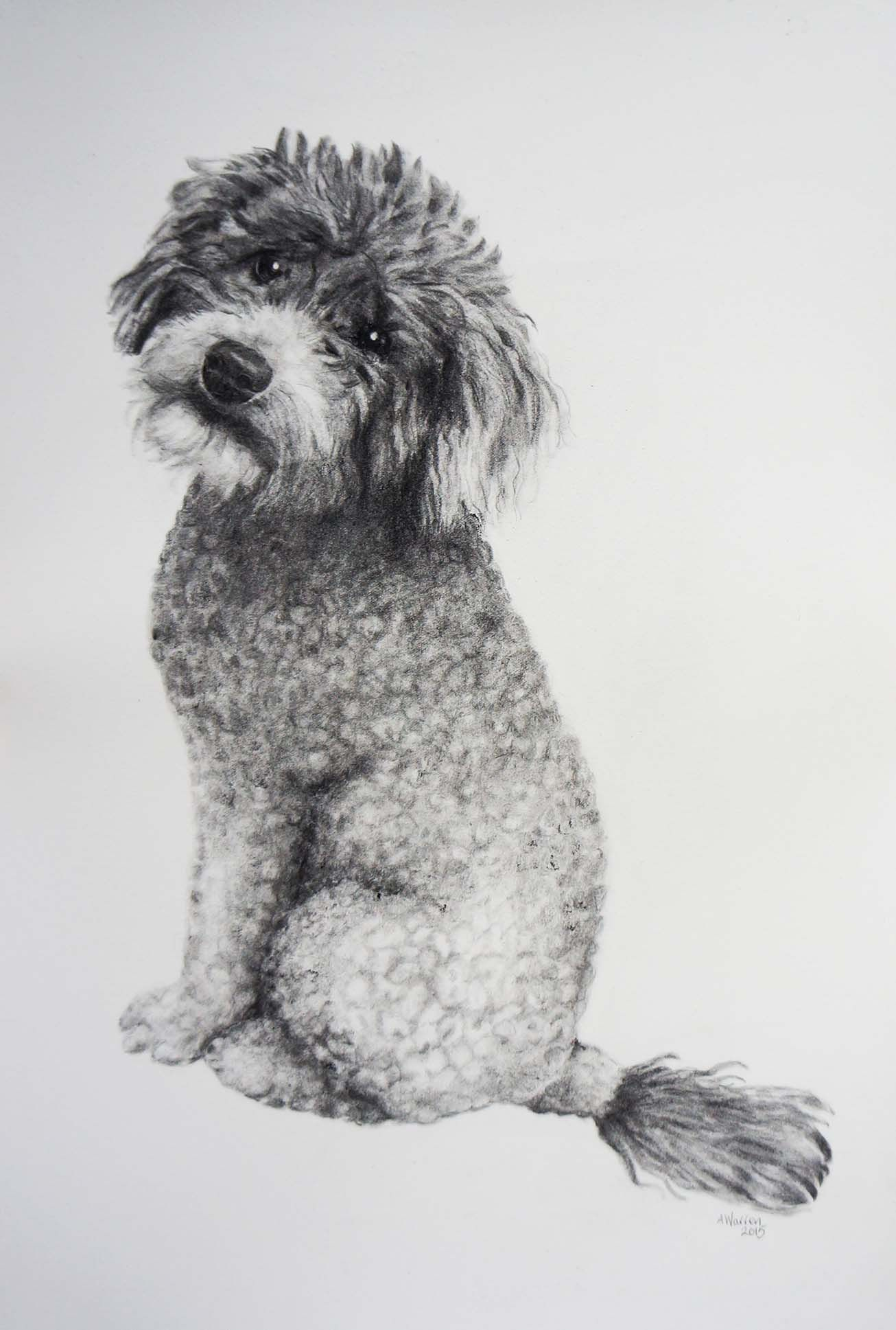 Poodles Drawings In Pencil Google Search Dibujos De Perros Retratos De Mascotas Pintura Perro