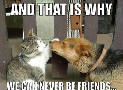 Friends Forever Meme Slapcaption Com Funny Cats And Dogs Funny Dogs Funny Dog Memes