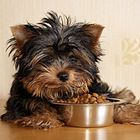 Dog food is a contentious topic among pet parents, and that is the reason to research the issue of dog food especially natural raw dog food with no additives, only natural essential ingredients check it out at the DogsiteWorld Store - dehydrated dog food which is a low calorie dog food.  Dog Food & Dog Treats | Dogster
