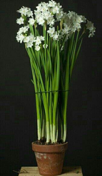 Pin Von Paula Auf Simply Life Schone Blumen Fruhlingsgarten Bluhende Pflanzen