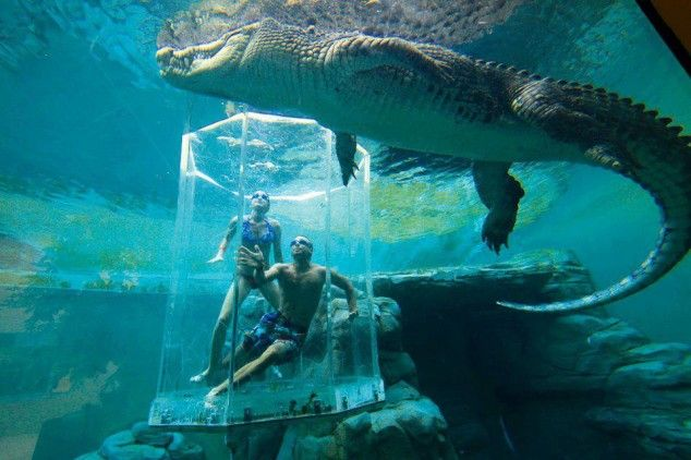 Crocosaurus Cove Aquarium | Adventure holiday, Places to travel ...