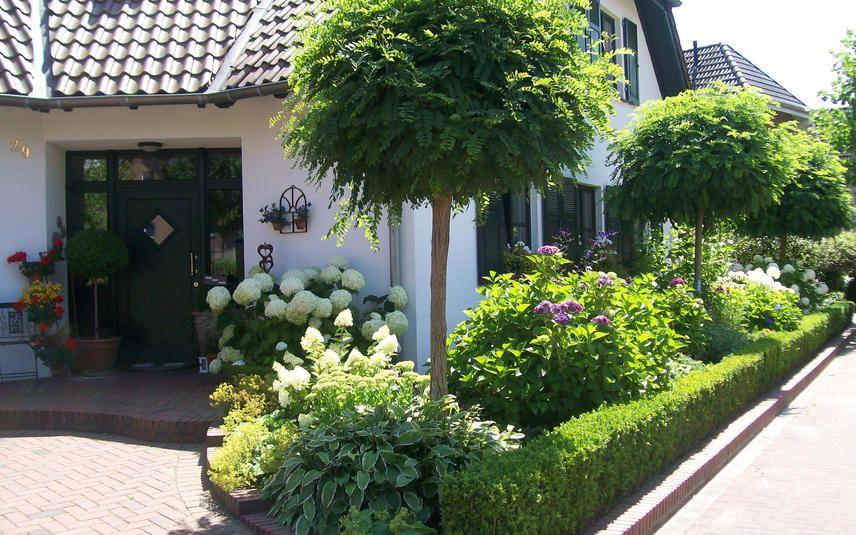 Kugelrobinie Eleganter Kugelbaum Im Kleinformat Garten Vorgarten Bepflanzung