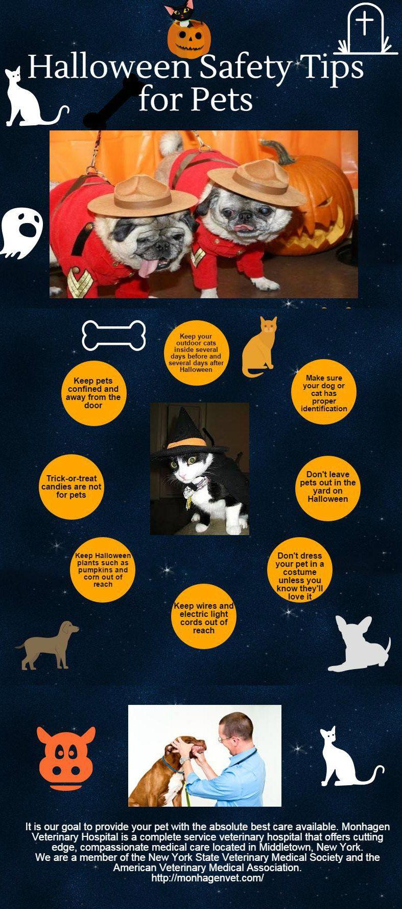 Halloween Safety Tips For Pets Pet vet, Pets, Halloween