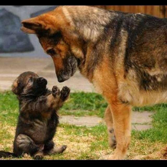 Wait Mom!I can explain everything