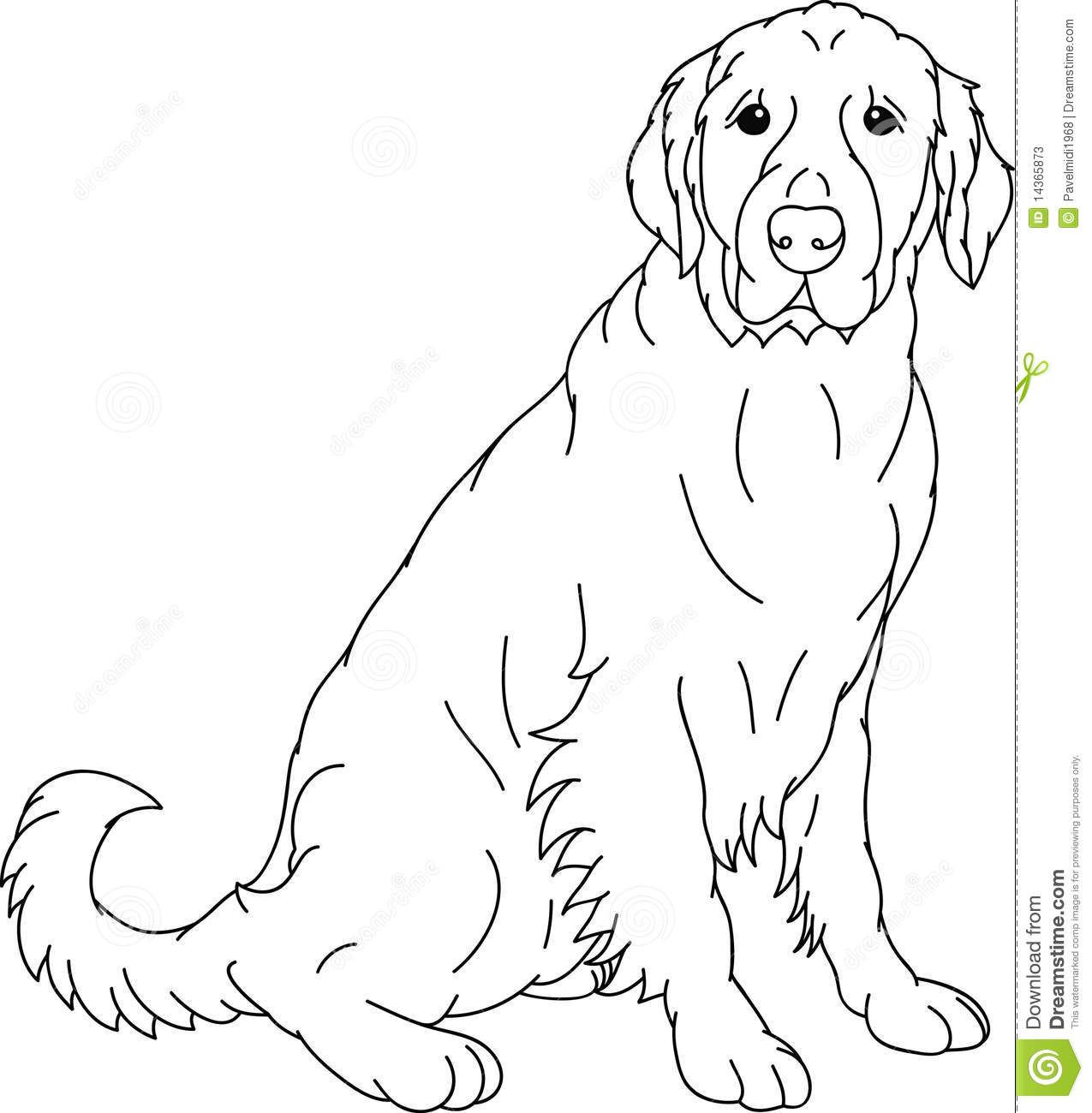 Golden Retriever Super Coloring Dog coloring page