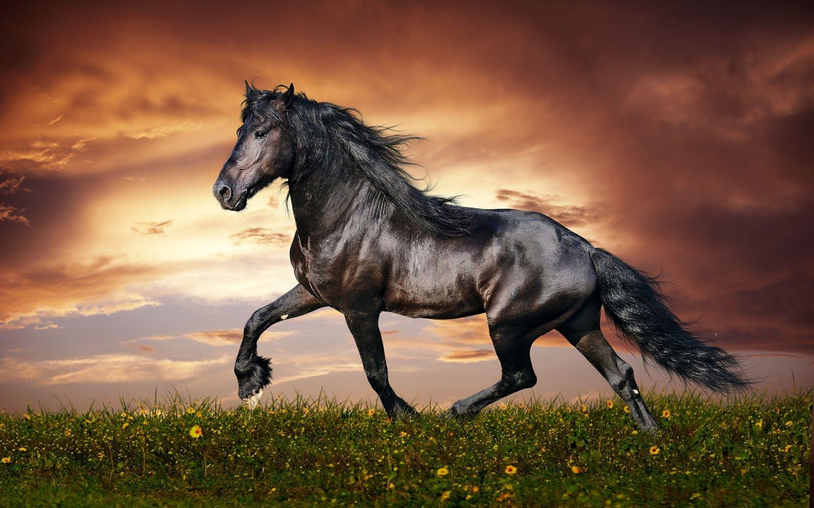 Must see Wallpaper Horse Laptop - c558f46055be29dc8619eb9f2a11f9f8  HD_833020.jpg