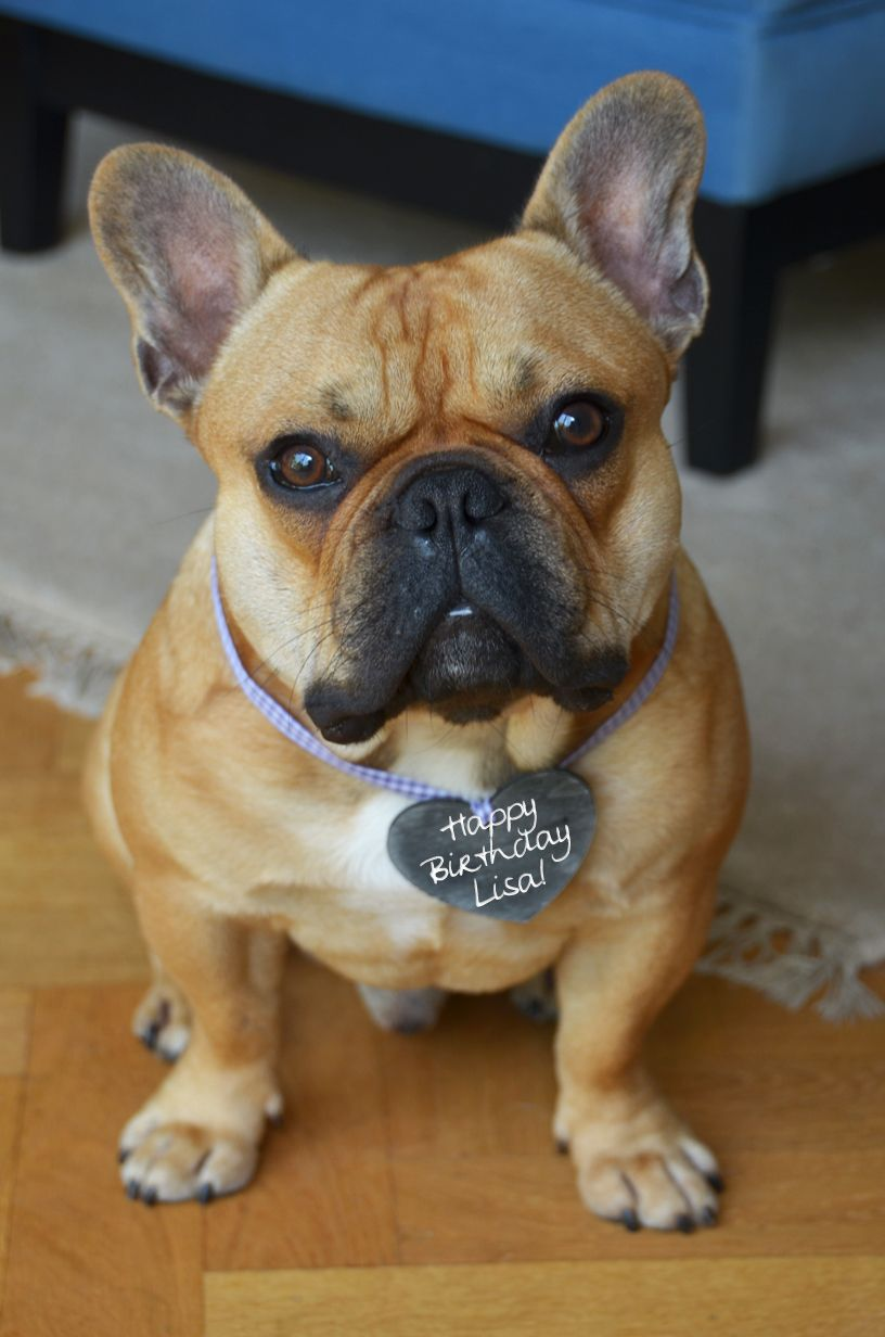 Happy Birthday Lisa French Bulldog Birthday Cute Bulldogs French Bulldog Cute Dogs