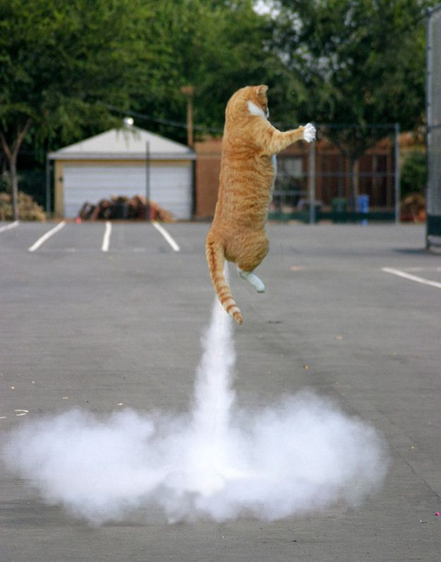 Baby Youre A Firework Perfectly Timed Cat Photos Funny - 25 perfectly timed animal photographs