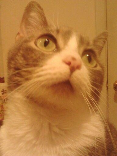 Up close and persinal of Molly