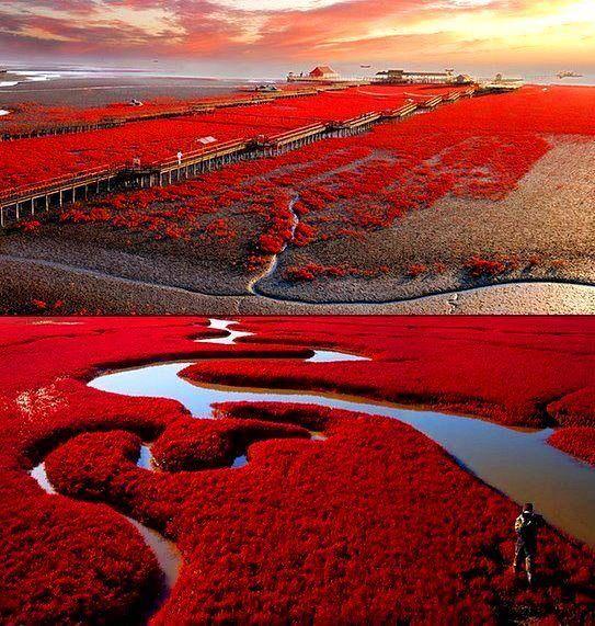 Red Beach Panjin, China - Imgur